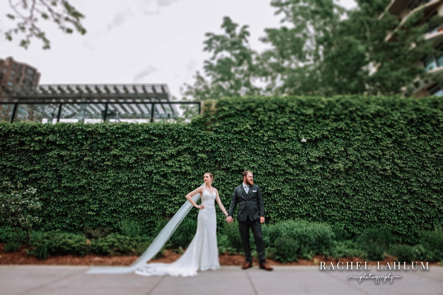 Bride and groom wedding portrait at Loring Park Greenway ivy wall in Downtown Minneapolis