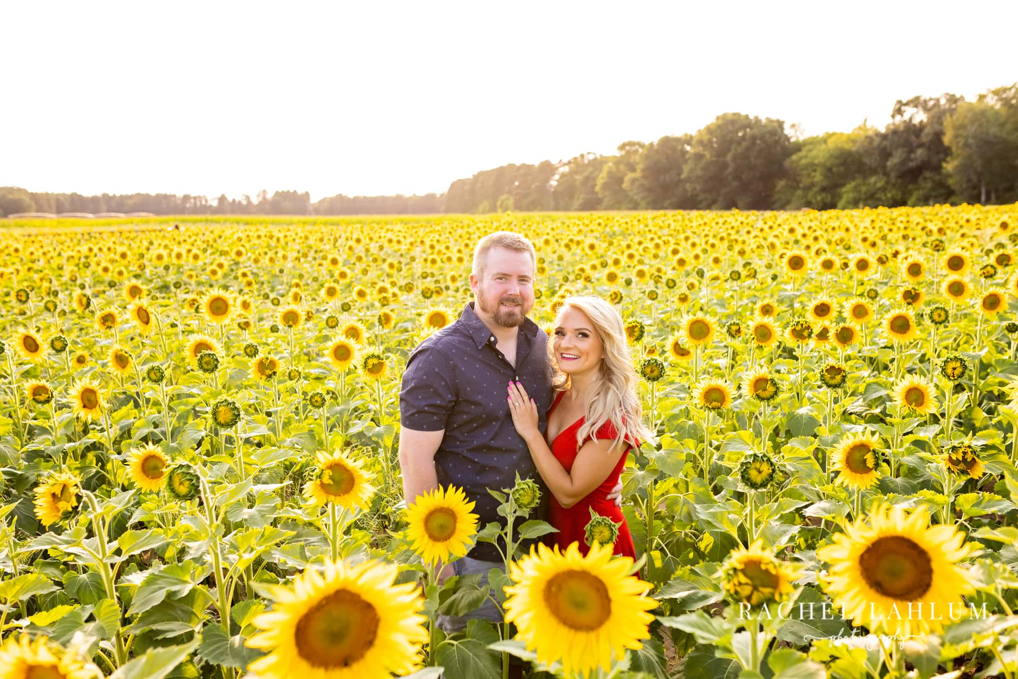 Newly engaged couple pose in a sunflower field at Green Barn Garden Center in Isanti, Minnesota.