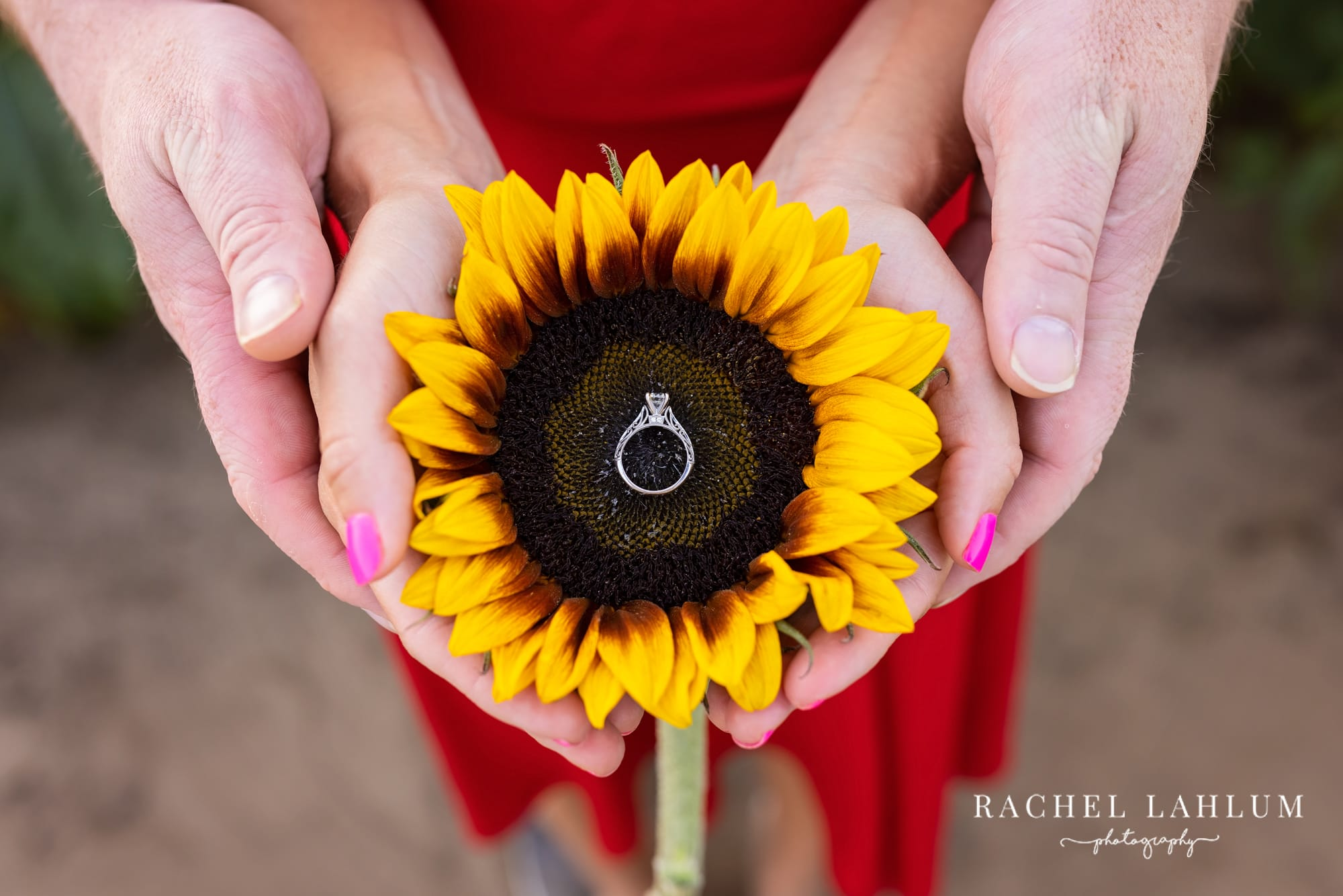 Couple holds a sunflower head with engagement ring placed in the center at Green Barn Garden Center.