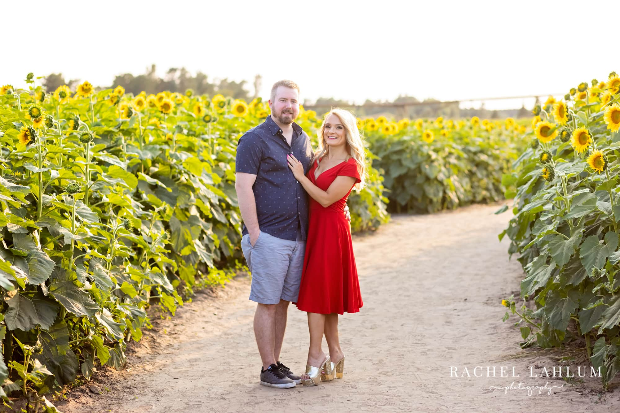 Engaged couple pose for a portrait on a trail cutting through sunflower fields.